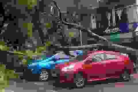 Hà Nội: Cây xanh đổ vào 2 ôtô giữa trời nắng ráo