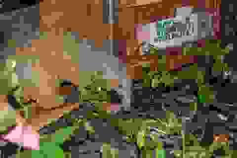 20 cá thể tê tê Java được thả về tự nhiên