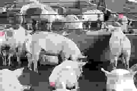 Dùng hóa chất sơn tường, dệt nhuộm sản xuất thức ăn chăn nuôi