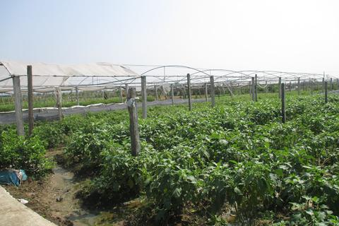 Chuyển đổi cơ cấu cây trồng cạn trên đất lúa cho thu nhập cao
