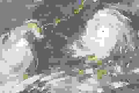 Biển Đông sắp có bão mạnh, cảnh báo mưa lớn diện rộng