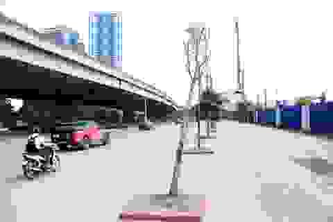 Hà Nội: Hàng cây xanh mới trồng đã chết khô