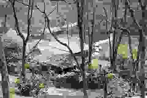 Vì sao chưa công bố kết luận vụ resort không phép ở VQG Ba Vì?