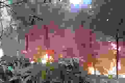 Năm 2016 mất hơn 3.300 ha rừng do bị cháy