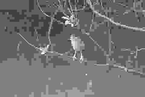 """Hồi hộp xem cò xanh """"phi thân"""" săn mồi ở hồ Gươm"""