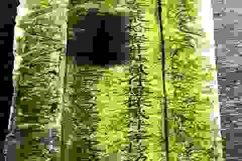 Phát hiện tấm bia cổ có niên đại năm Gia Long thứ 11