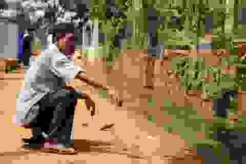 Hàng chục hộ dân sống chung với nước cống