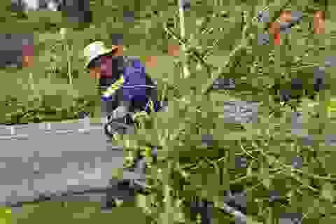 Chặt bỏ 1.700 cây độc trên quốc lộ