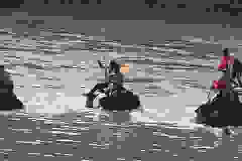 Đến Buôn Đôn chiêm ngưỡng voi thi đá bóng, thi vượt sông