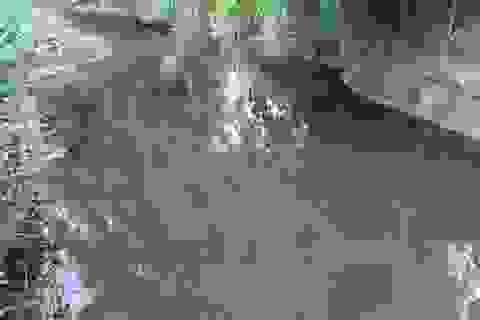 Nước suối bất ngờ đổi màu đen ngòm, cá tôm chết hàng loạt