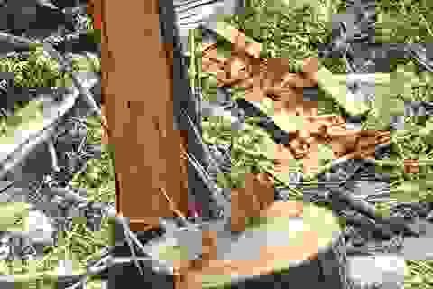 Phó Chủ tịch tỉnh cùng phóng viên vào kiểm tra rừng bị phá