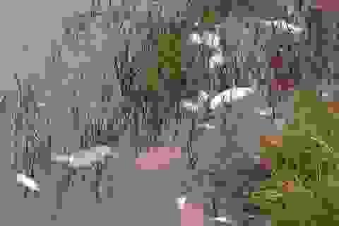 Huế: Cá chết hàng loạt, nông dân điêu đứng