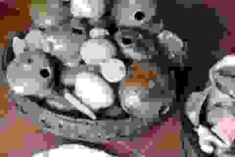 Đào móng xây thành chùa phát hiện nhiều bình gốm sứ nghi cổ vật