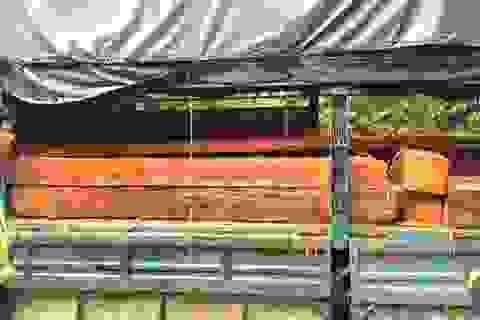 """""""Ngụy trang"""" 3 mét khối gỗ quý bằng rơm rạ và hạt dẻ"""