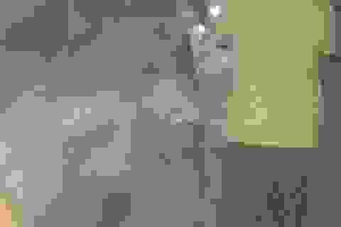 Liên tiếp bắt 2 vụ gỗ lậu trong đêm