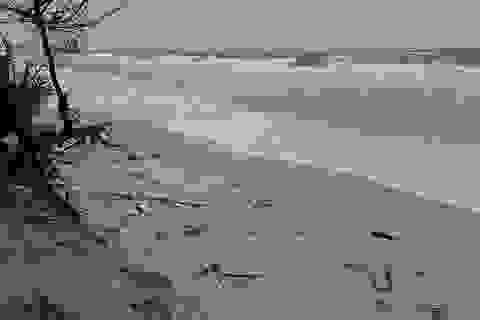 Lo sợ bão chưa vào, biển đã sạt lở nghiêm trọng