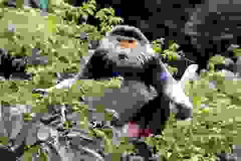 Cán bộ không được nhận quà biếu là sản phẩm từ động vật hoang dã