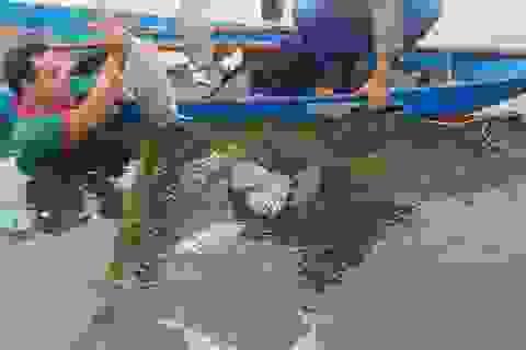 Hàng tấn cá lồng chết đột ngột