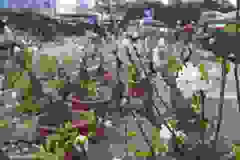 """Mai trắng bonsai giá chục triệu """"hút"""" khách nhà giàu chơi Tết"""