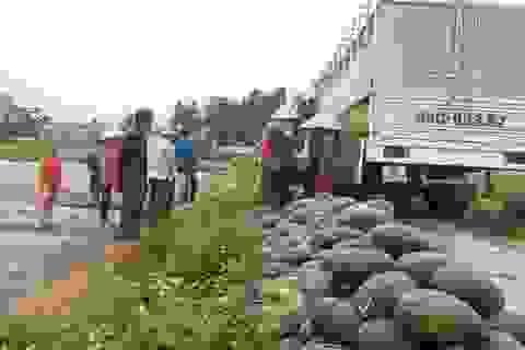 Nông dân trúng lớn vì dưa hấu được mùa, được giá