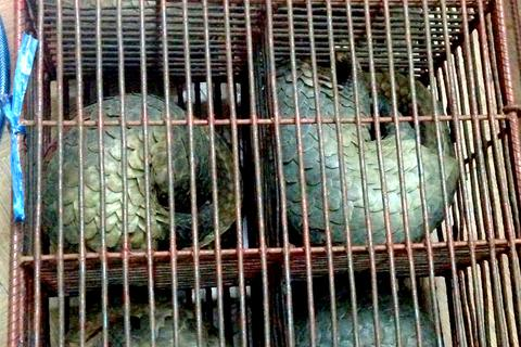Triệt phá đường dây buôn bán động vật hoang dã quý hiếm