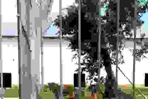 """Vụ nuôi động vật hoang dã, quý hiếm trong...""""chuồng gà"""": Hơn 30 cá thể thú nuôi đến từ đâu?"""