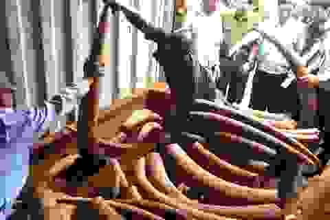 Khởi tố vụ buôn lậu ngà voi trị giá hàng trăm tỷ qua cảng Cát Lái