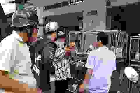 Chuộc thú cưng giá trên trời ở chợ chó mèo lớn nhất Sài Gòn