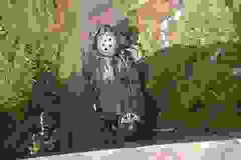 Xe chở Phó Phòng CSGT gặp nạn, rơi xuống suối