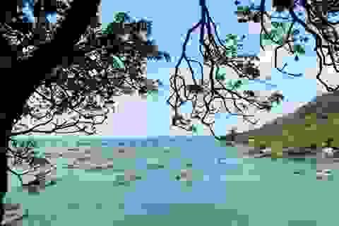 Vẻ đẹp quyến rũ của đảo Hòn Nghệ