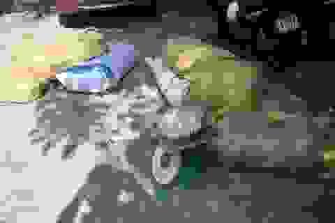 Hà Nội: Xe khách chở hơn nửa tấn thịt bốc mùi hôi thối