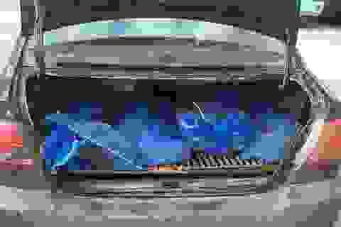 Hà Nội: Giấu hơn 20 con kỳ đà trên xế hộp