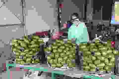 """""""Sốt"""" cây giống bơ ghép đầu dòng trên cao nguyên Lâm Đồng"""