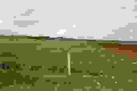"""Vụ """"hóa phép"""" đất lúa thành đất ở: Không đúng luật vẫn được cấp sổ đỏ!"""