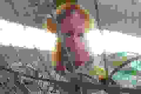 """Xót lòng nhìn """"bé"""" khỉ thiểu não mút tay trong lồng sắt"""