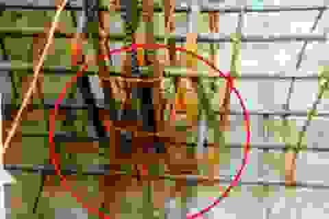Bức xúc trước hàng loạt sai phạm trong xây dựng trường mầm non