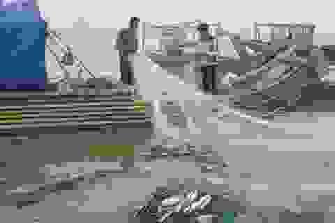 """Ngư dân """"xông biển"""" cầu may đầu năm"""