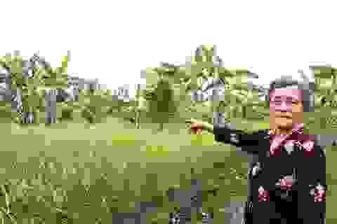 Cho người nghèo mượn đất canh tác lại bị kiện ngược đòi quyền sở hữu