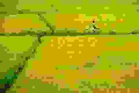Đi qua cánh đồng