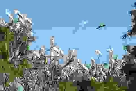 Đảo Cò Hải Dương - nhà chung của nhiều loài chim