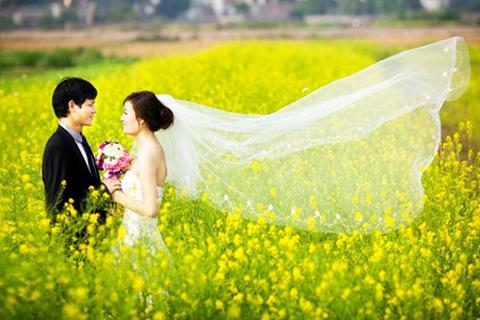 Cải vàng tô sắc mùa đông Hà Nội