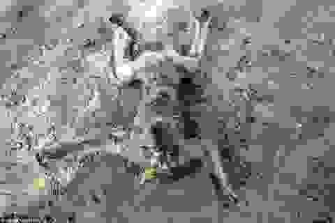 """""""Nghĩa địa"""" của hàng loạt thú quý bị bỏ đói đến chết"""