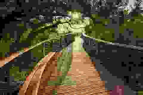 Ấn tượng cây cầu đi bộ xuyên núi ở Nam Phi
