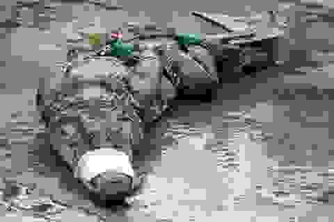 Vây bắt cá sấu dài 2m trong khu nước ngập gần nhà