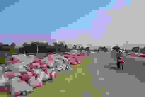 Chuyện lạ ở Phú Yên: Tranh nhau mua…phân bò