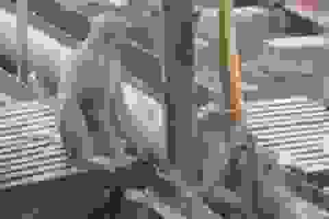 """Clip """"khỉ cứu bạn bị điện giật"""" gây ấn tượng mạng Internet tuần qua"""