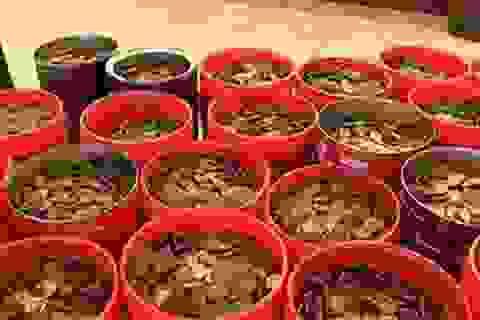 Mang hơn 2 tạ tiền xu đi đổi tiền giấy ở ngân hàng