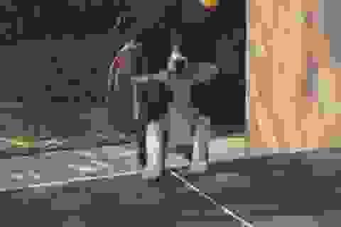 Thán phục chú chó có khả năng đánh bóng bàn tài tình