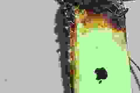 iPhone bất ngờ bốc cháy trong khi cắm sạc khiến người dùng bị bỏng