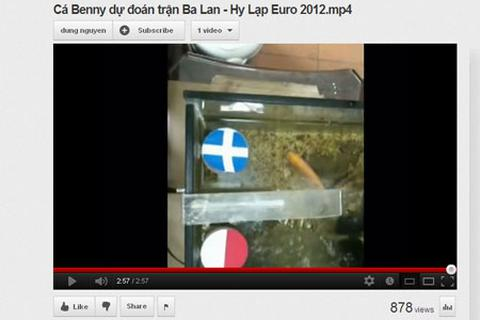 Cá vàng Benny tại Việt Nam tham gia dự đoán Euro 2012